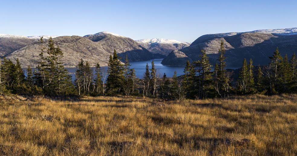Liåsen i Velfjord, Nordland