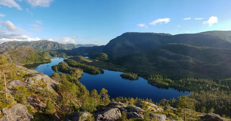Svadhylla - turtips i Velfjord, Nordland