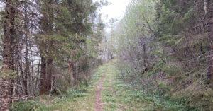 Vassenget skogsti