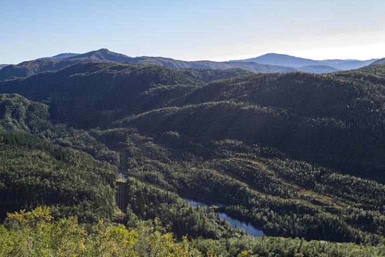 Skog i Velfjord