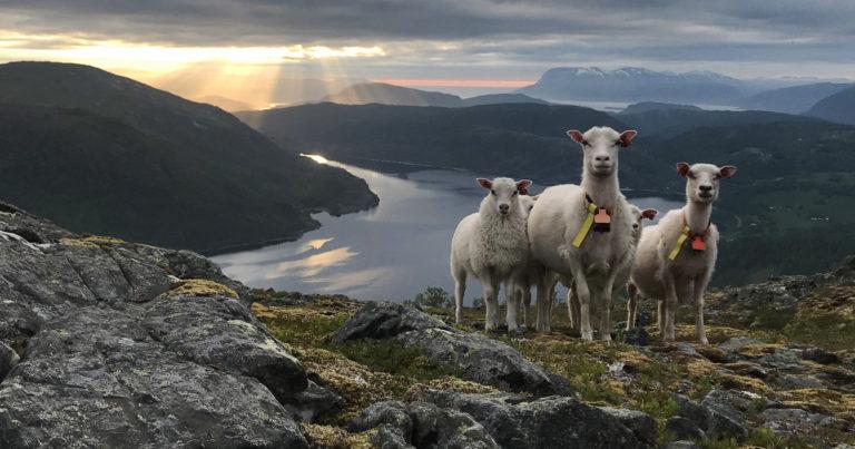 Kvennhatten (Kvernhatten) ved Sausvatn i Velfjord